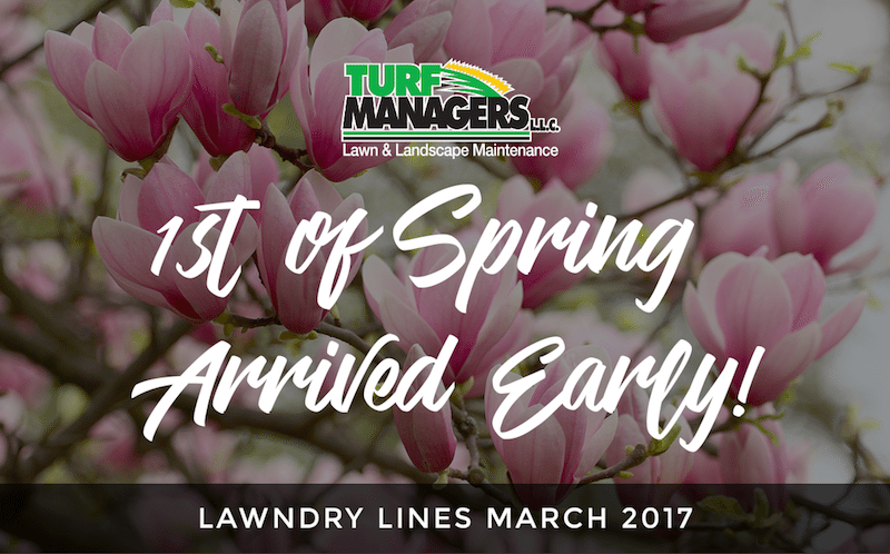 1st of spring lawn care