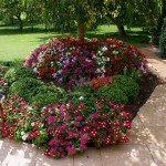 Garden with Impatiens