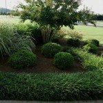 Pampas & Monkey Grass