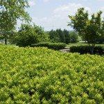 Close up of shrubs