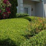 Detail of shrubs at home garden