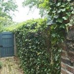 Backyard door and vines on brick wall