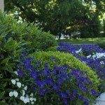 Garden by house (Impatiens & more)