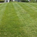 Freshly cut turf