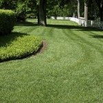 Freshly cut yard