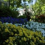 Close up of flower beds