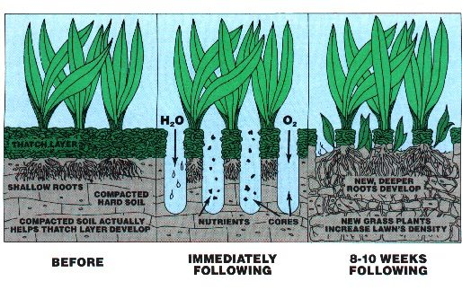 Aerate Your Lawn for Healthy Benefits