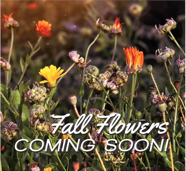 fall flowers coming soon
