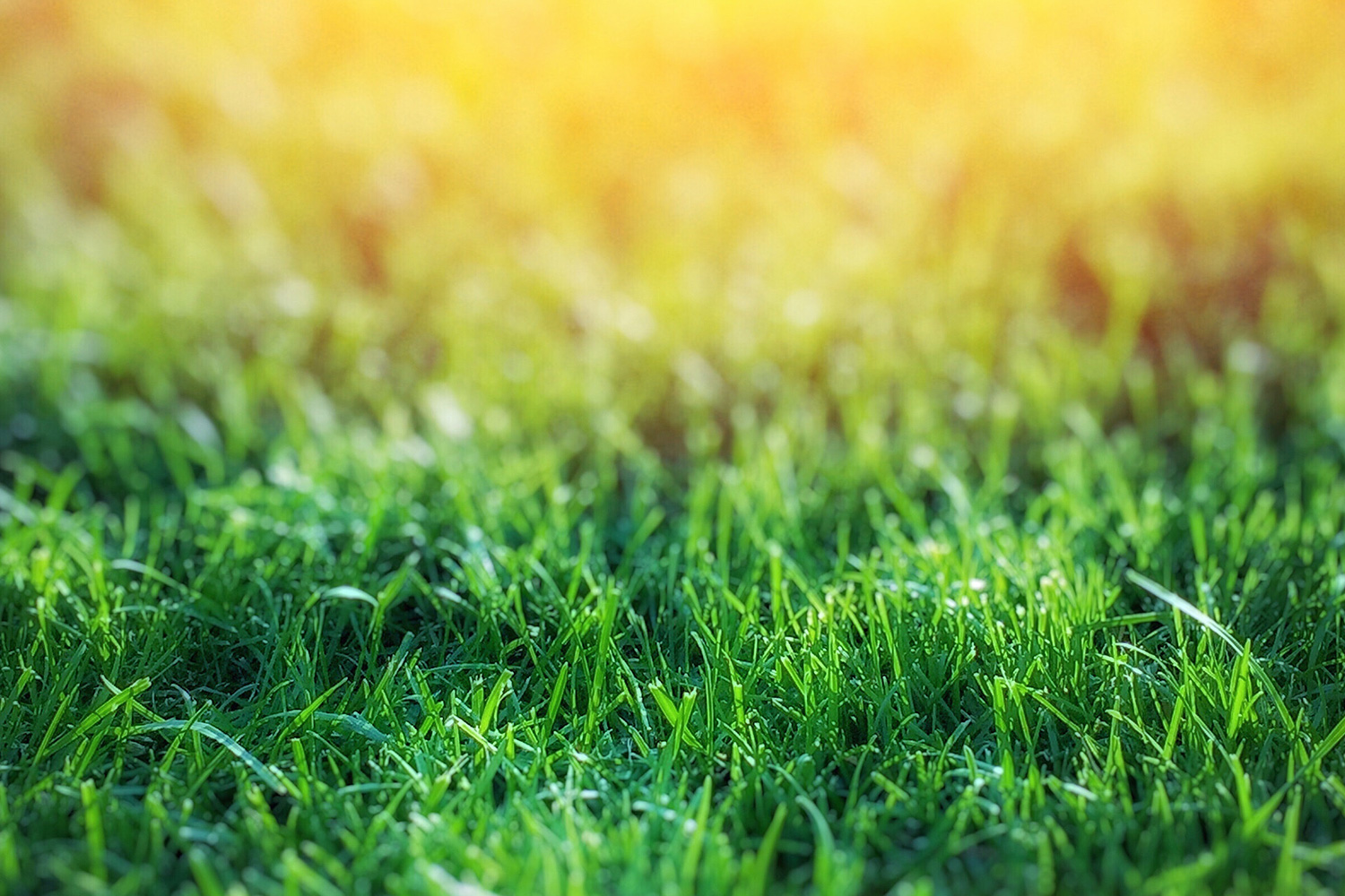 Getting-Brown-Patches-in-Your-Lawn–4-Tips-to-Properly-Prevent-Brown-Patch-Fungus
