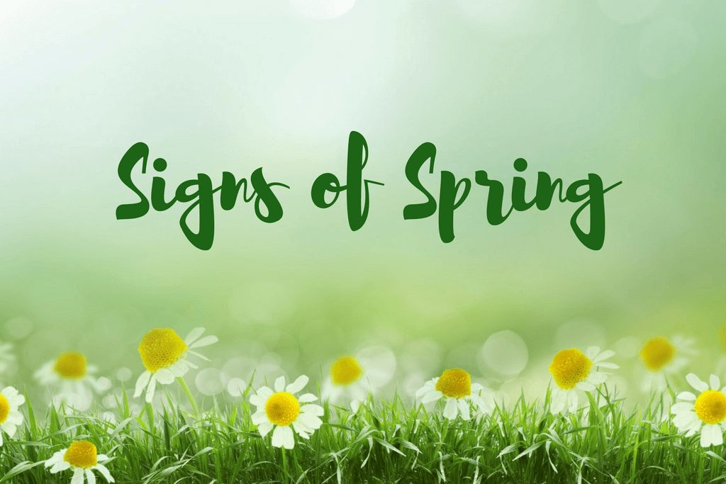Signs of Spring in nashville