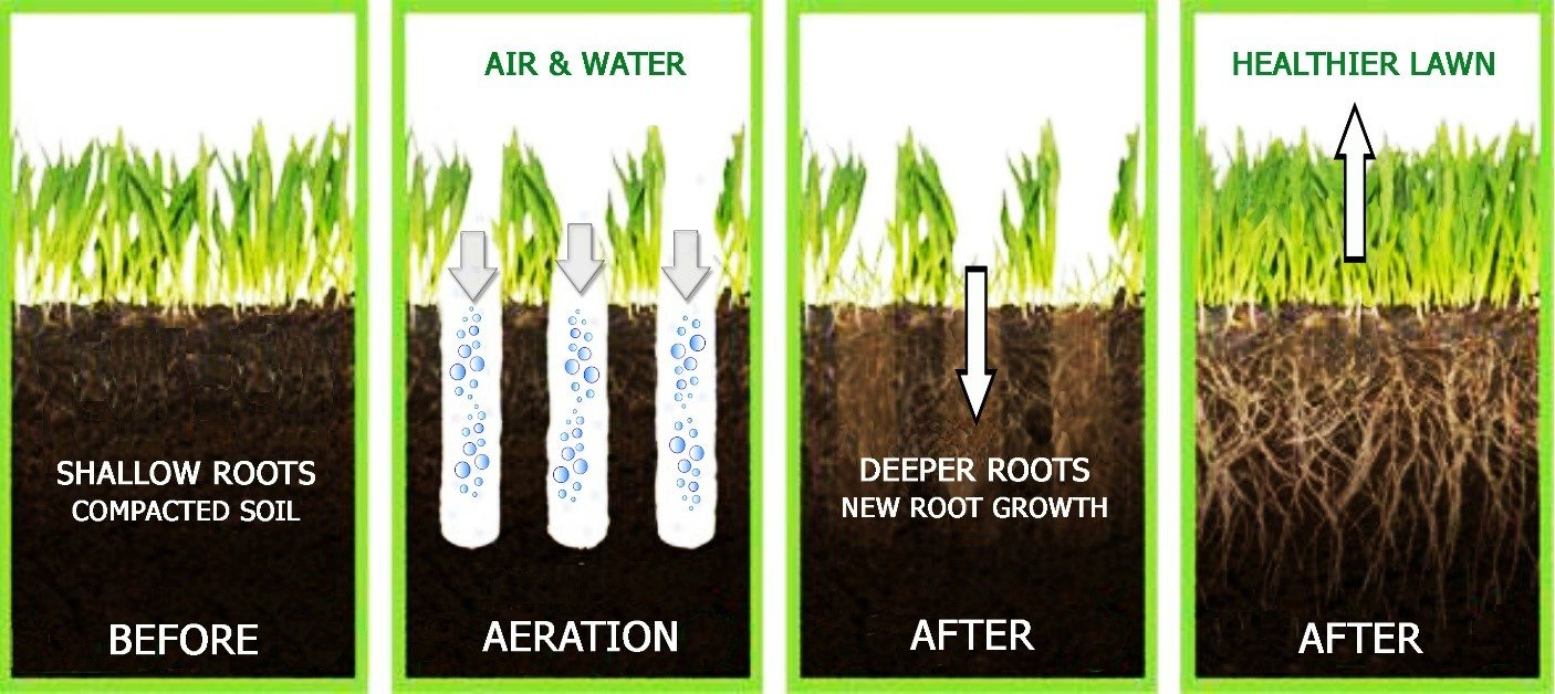 Aeration Diagram from the Lawn Institute
