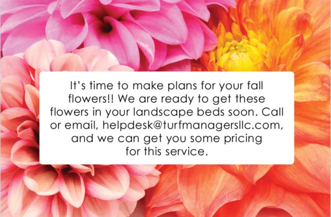 fall flower plans