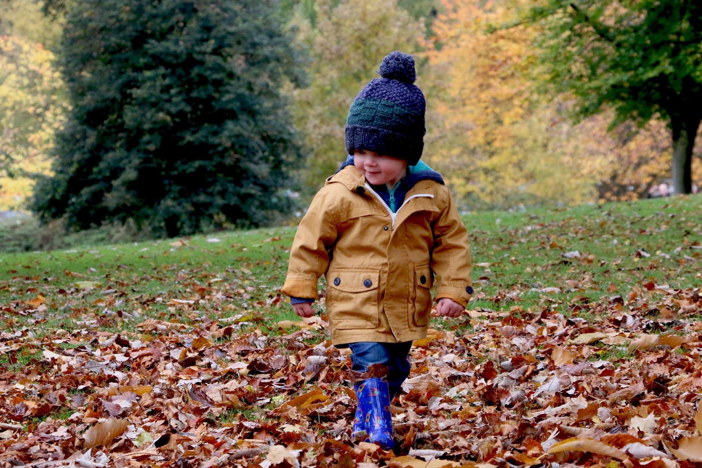Small Child Walking on Fallen Leaves in Yard