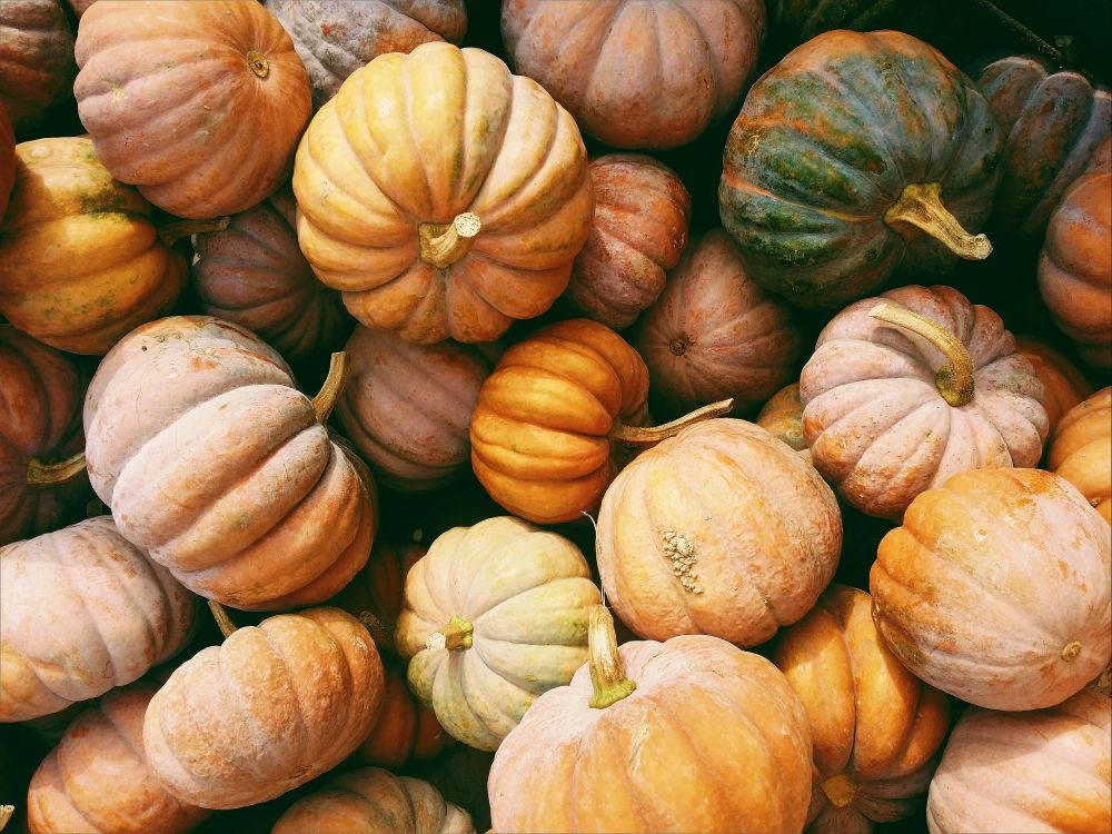 fall-pumpkins-gourds