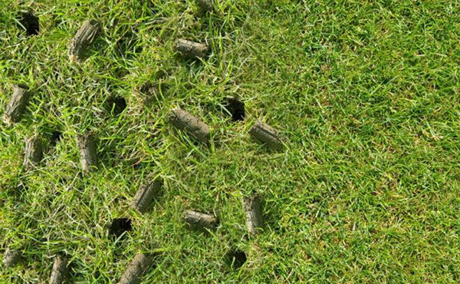 Lawn aeration plugs in yard