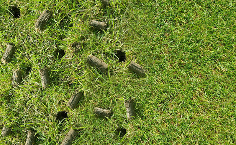 Lawn aeration plugs in yard