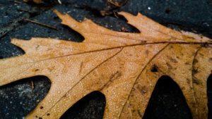 nashville leaf removal