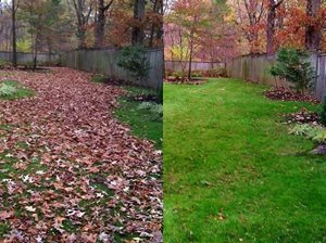 Fall Leaves Clean-up