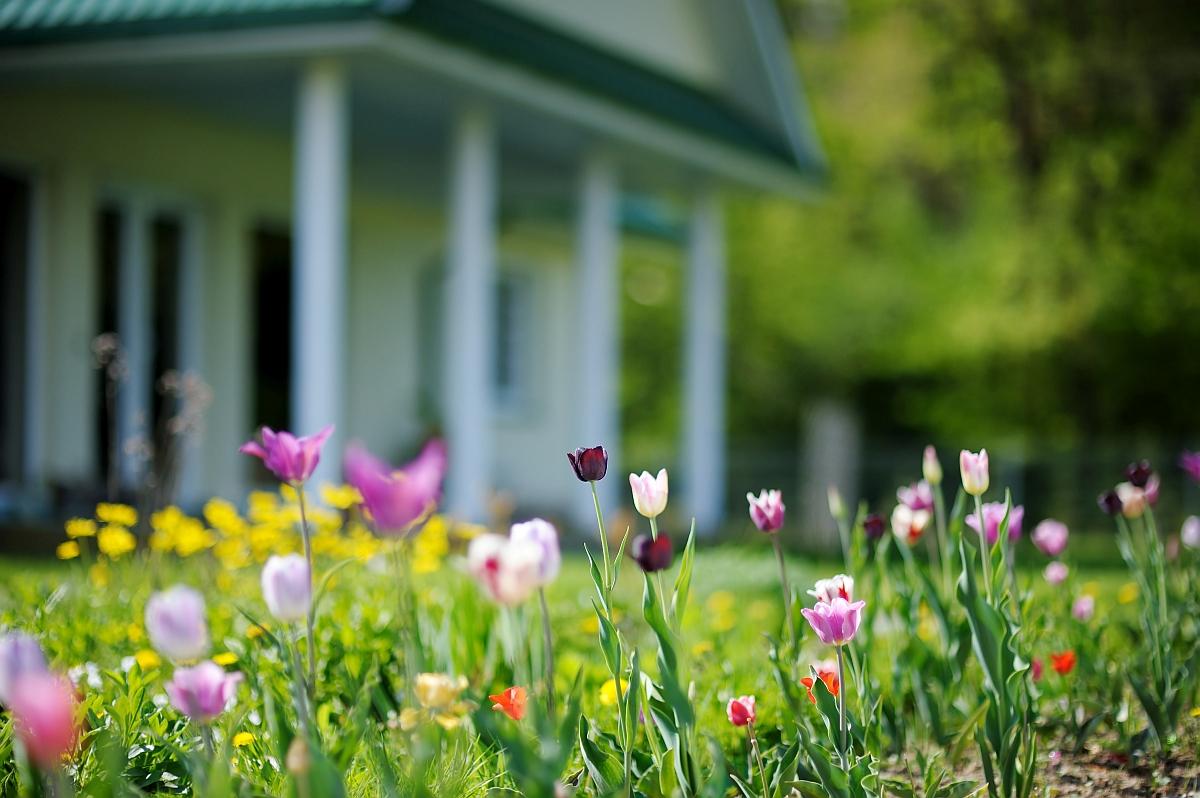 Tulip filled flower bed