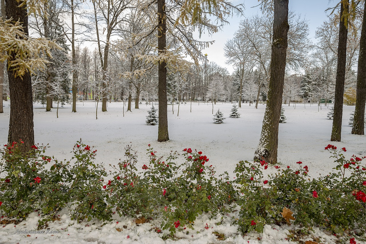 Newly snow covered lawn - protect your plants this winter