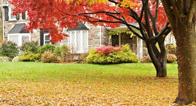 Residential Lawn in the Fall